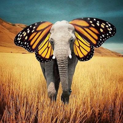 artistul elefant