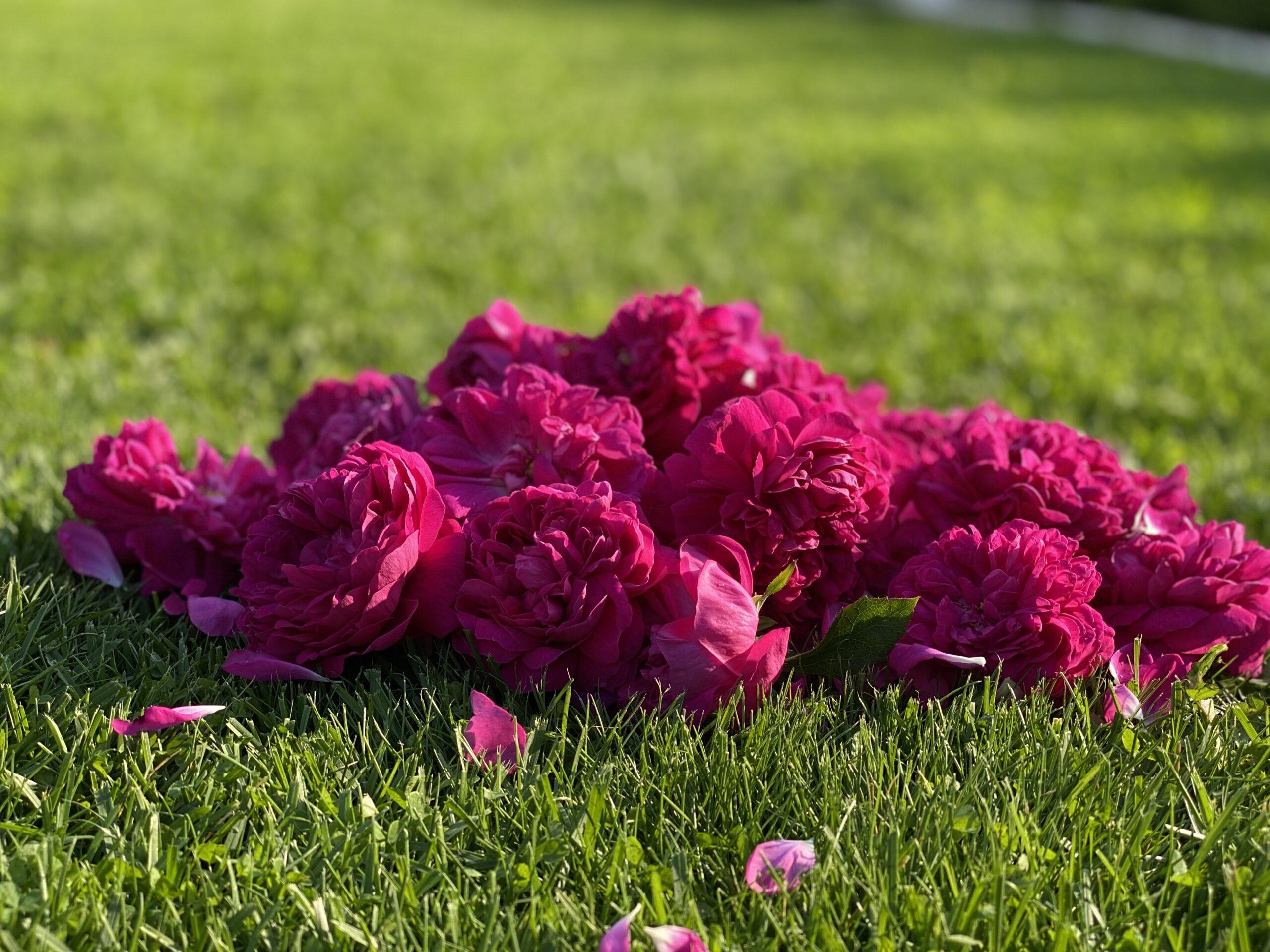 Sirop de trandafiri raw